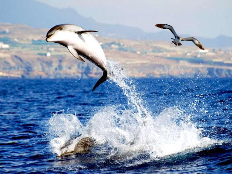 delfines-tenerife-vacaciones-niños-villa-mandi