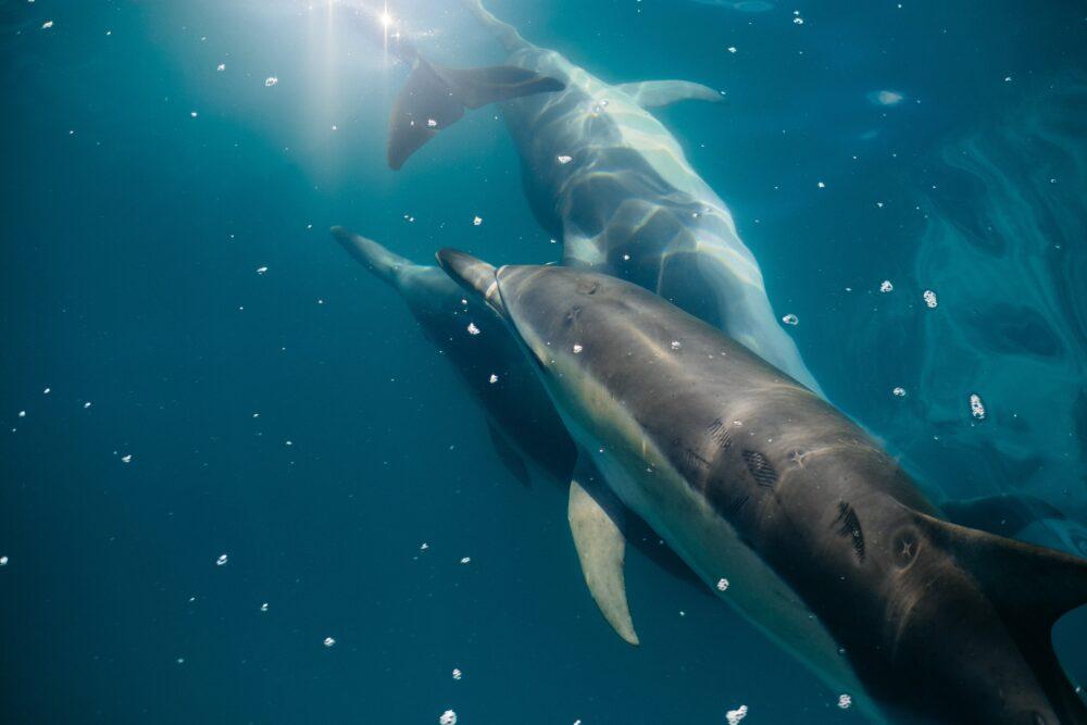 avistamiento-delfines-tenerife-hotel-villa-mandi